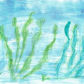 11 algues