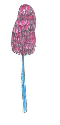 fleur rrr